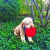 easy-disc-dog-toy-easy-disk-2000x2000-S